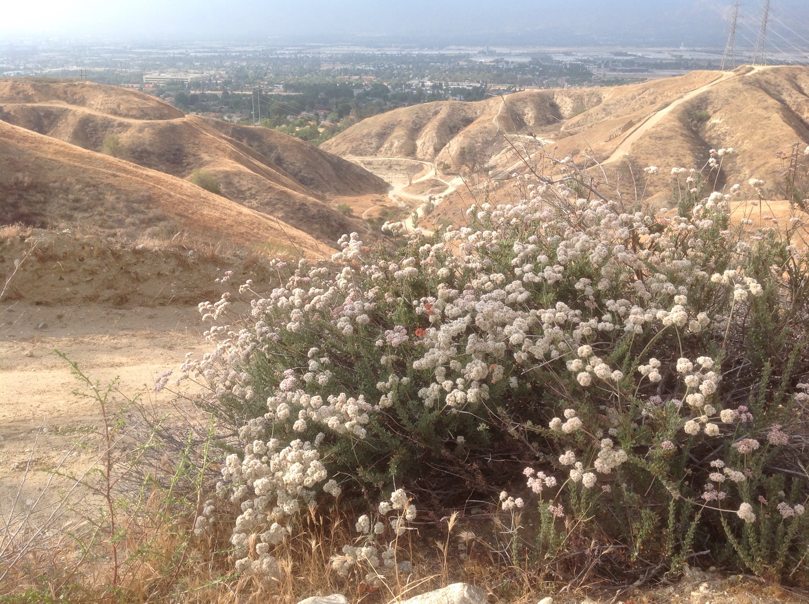 After paying homage to Hulda Crooks, I continued my three-hour hike in the  dusty hills above the park, ...